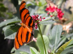 Butterfly Farm - Victoria Tourism