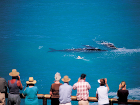 Whale Watching At Head Of Bight - Victoria Tourism