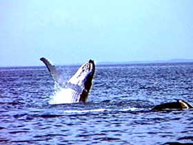 Whale Watching - Victoria Tourism