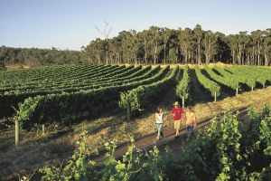 Margaret River Caves Wine and Cape Leeuwin Lighthouse Tour from Perth - Victoria Tourism