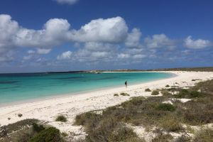 Abrolhos Island Half Day Fly and Flipper - Victoria Tourism